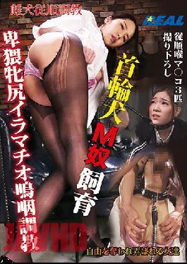 XRL-025 Studio K.M.Produce Collar Dog M Guy Breeding Obscene Mare Deep Throat Sobbing Training
